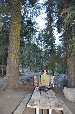 Lodgepole Campground:                   Bear Lockers & Table :)