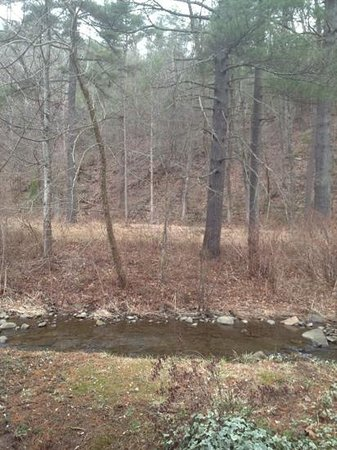 The Cabins at Brookside:                   The babbling brook behind cabin 4