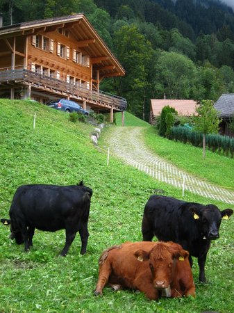 Hotel Kirchbuehl: lovely cows greeting us outside the chalet