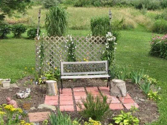 The Ginger Cat Bed & Breakfast: Relax in the garden