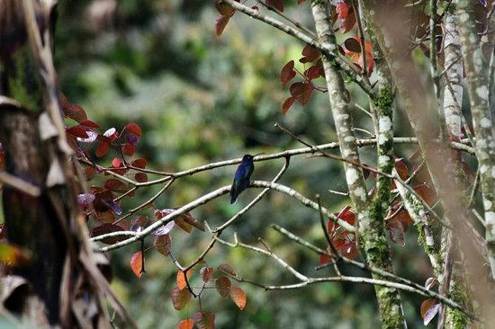 Finca Lindos Ojos:                   Hummingbird at finca