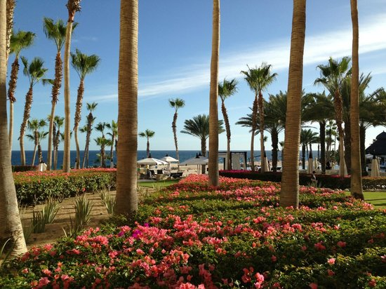 Hilton Los Cabos Beach &amp; Golf Resort:                   From our patio