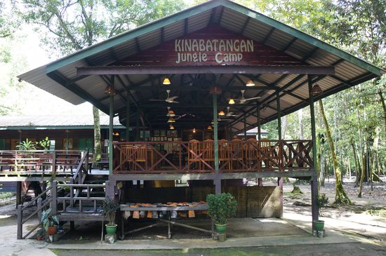 ‪Kinabatangan Jungle Camp‬