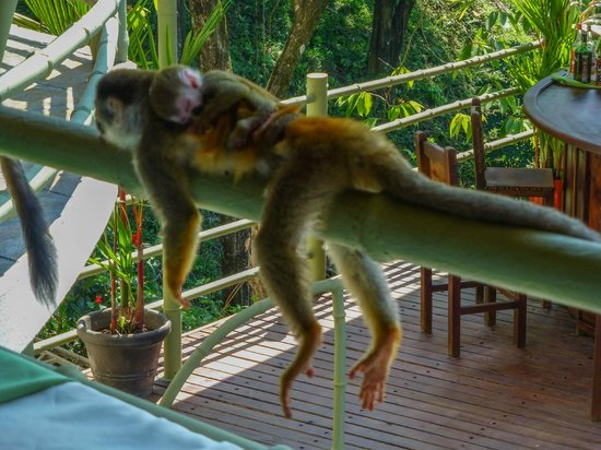 Issimo Suites Boutique Hotel and Spa:                   capuchin monkeys