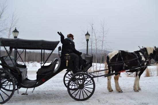 Mountain View Grand Resort & Spa:                   Fun ride and great historian guide who is an animal lover.