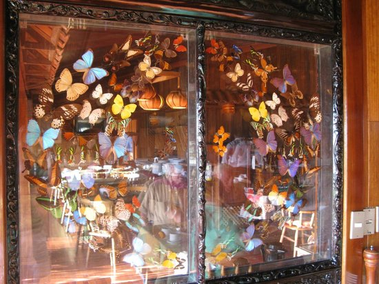 Arenal Lodge:                   butterfly display inside restaurant window