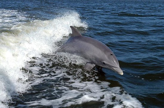 Sightseer Whale and Dolphin Cruises