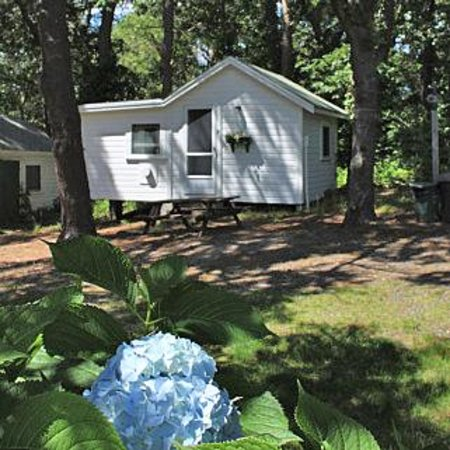 Pine Grove Cottages-billede