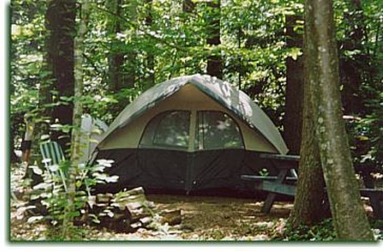 Pinederosa Camping Area