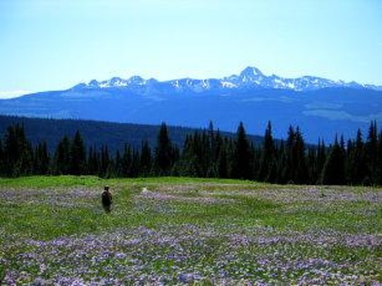 Photo of Wells Gray Guest Ranch Clearwater