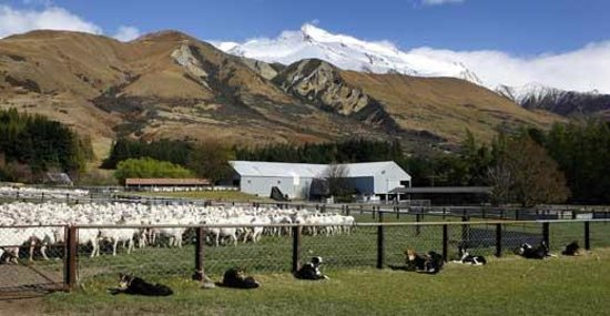Mackenzie District, New Zealand:                                     Glentanner Station