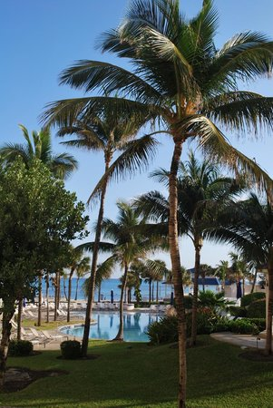 Sheraton Nassau Beach Resort &amp; Casino:                   Palms on beach