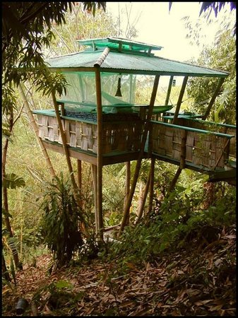 ‪Tropical Treehouse‬