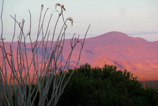 Yucca, :                   Sunset facing East