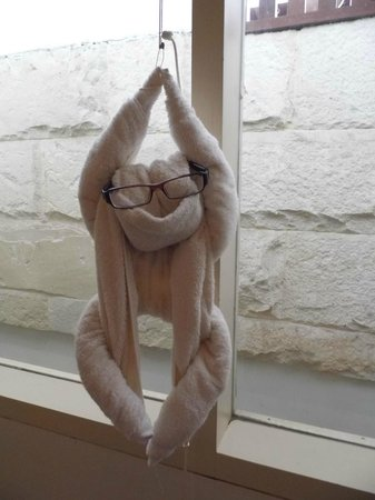 Tanaya Bed & Breakfast:                   Towel monkey