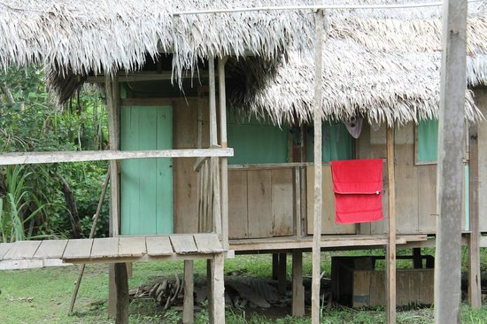 The Amazon Jungle Guide:                   Our room on the left