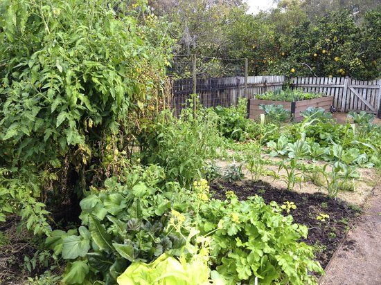 A corner of bountiful vegetable garden foto de harry p for Jardines de harry p leu