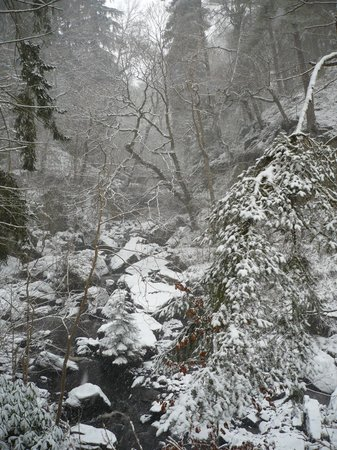 Northumberland National Park, UK:                   Hareshaw Linn in the snow