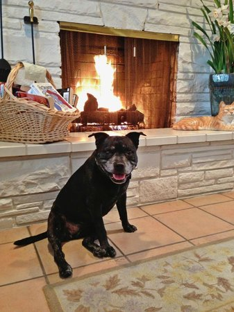 Carmel Country Inn:                   Abby in front of the fireplace in the breakfast room