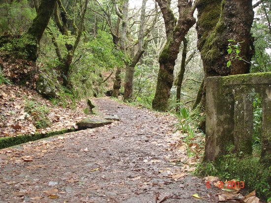 Photos of Levada Walks, Funchal