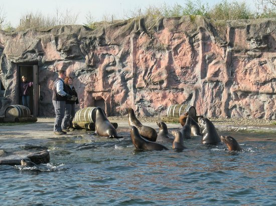 Gelsenkirchen, Germany:                   Sea lions. Lunch time.