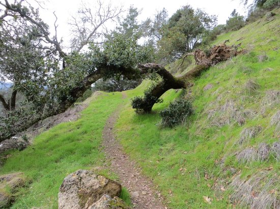 Calistoga Ranch, An Auberge Resort:                   Hiking trail