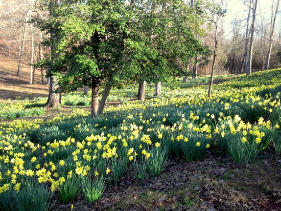 mrs lee 39 s daffodil garden gladewater reviews of mrs lee 39 s daffodil garden tripadvisor
