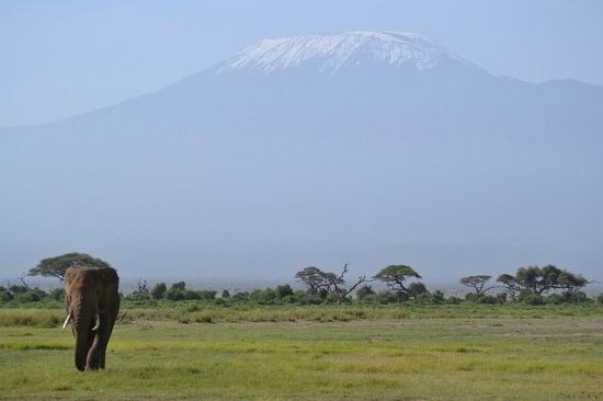 4 Days Nairobi Amboseli Tsavo West and Tsavo east safari