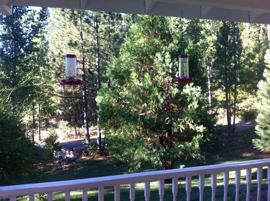 Blackberry Inn at Yosemite:                   View from the front deck