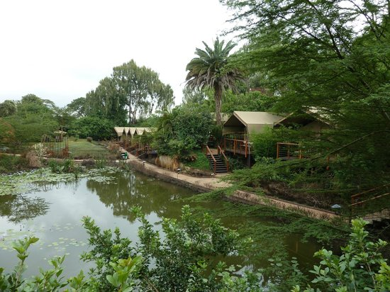 Wildebeest Eco Camp: Row of deluxe safari tents