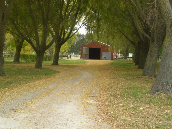 Willow Lodge: Autumn on the drive