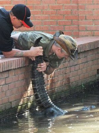 Gator Pits and Cocktail Cruises