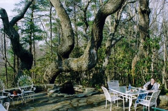 """Crooked Oak Mountain Inn:                   The original """"crooked oak"""" (from about 2004)"""