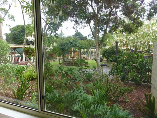 Bonville, Australia: The garden view from the cottage kitchen window