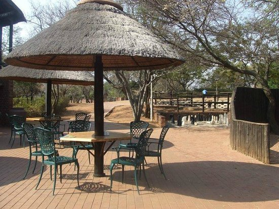 Golden Leopard Resort - Manyane:                   Swimming pool/ bar &amp; restaurant area
