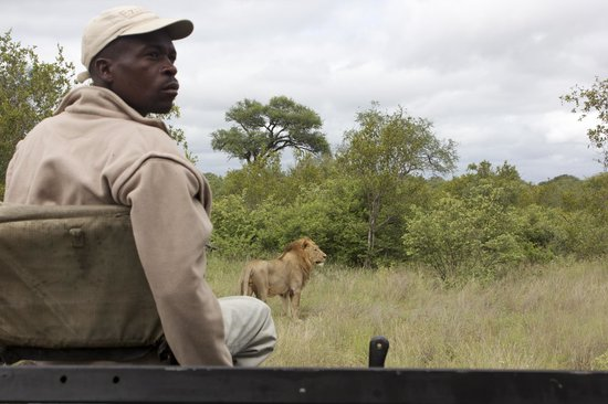 Private game reserve, south africa: frans and lion on game drive