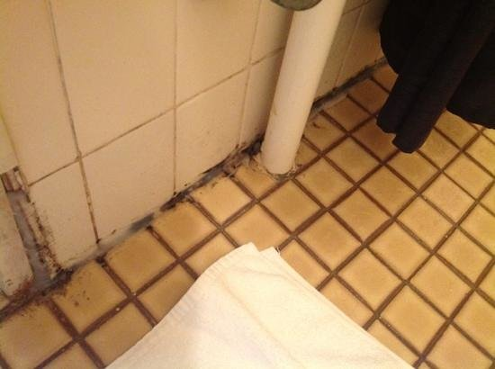 Challis Lodge:                   no way you could get this clean, my damp and smelly shower/tolilet room