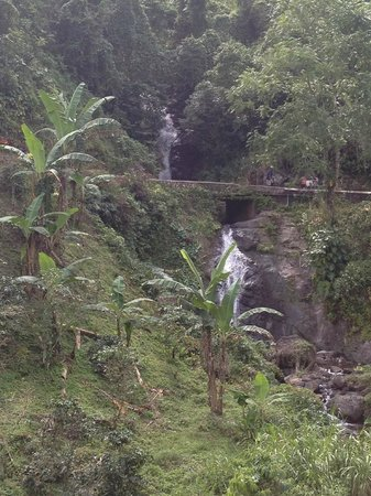 Moon Palace Jamaica Grande: Waterfall in Blue mts