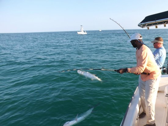 Tampa bay snook fishing charters picture of holmes beach for Tampa bay fishing guides