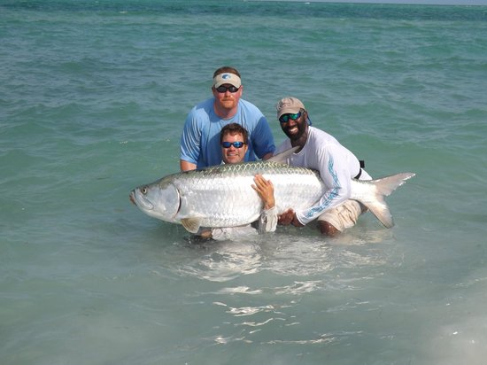 Tampa bay snook fishing charters picture of holmes beach for Tarpon fishing tampa