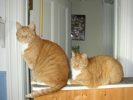 Lunenburg, Canada: B&B cats, Bill & Ben