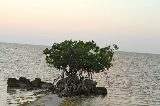 Deer Run Bed & Breakfast: Mangrove in front of the B&B
