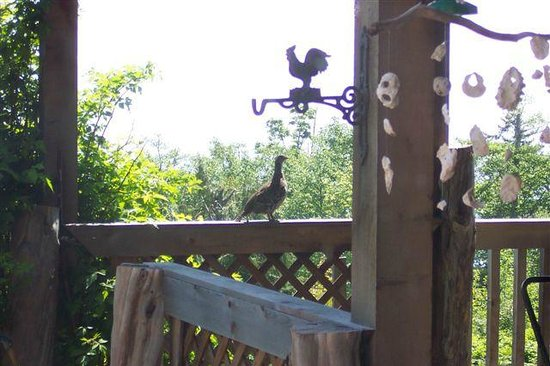 Sooke, Canada: A grouse came to visit Heron's Nest