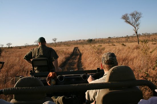 Modimolle (Nylstroom), Sr-Afrika:                   Safari al Sabi Sand