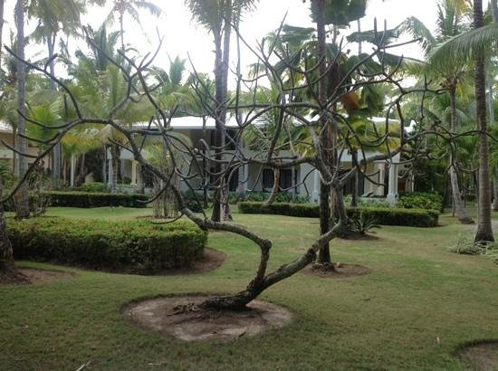 Paradisus Punta Cana:                                     very nice vegetation and clean grounds