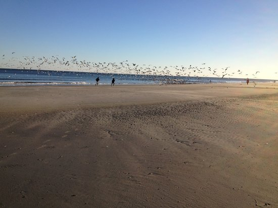 Dunes Village Resort:                   Beach view in front of the hotel - chasing seagulls