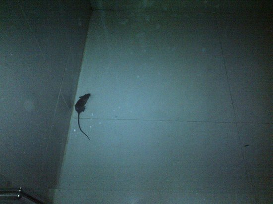 All Seasons Bangkok Siam:                   mouse in bathroom