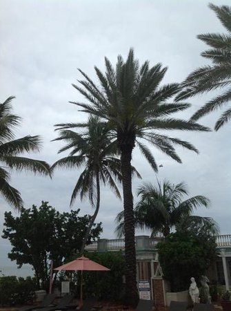 Southernmost House:                   Old biplane flying over the palms by the pool