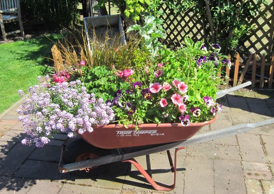 Clinton, Вашингтон: Wheelbarrow full of flowers