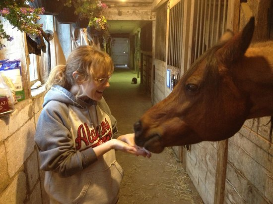 The Inn at Westwynd Farm: Feeding the horses in the barn